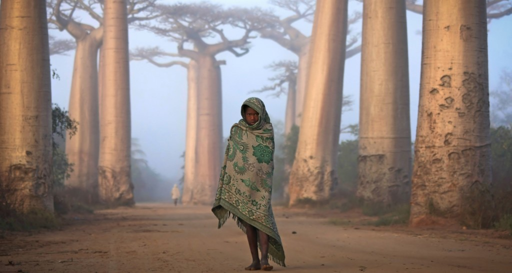 Girl and Baobabs, Madagascar. Photograph by Ken Thorne for National Geographic