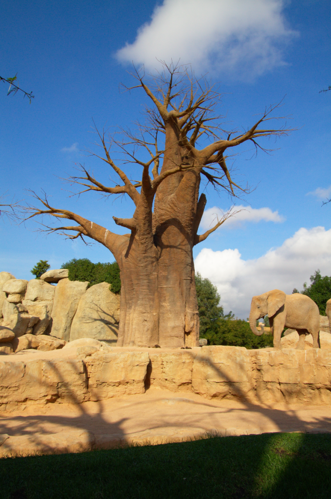 Artificial Baobab tree and Elephant in Bioparc Valencia, Spain