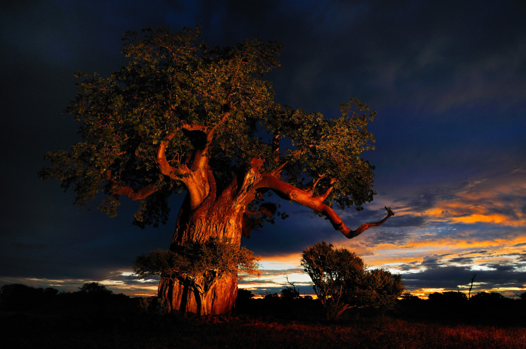 scenic Baobab picture (Republic of Botswana)