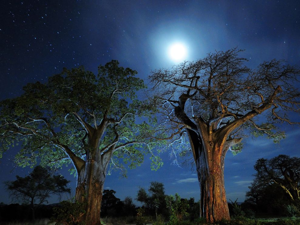 baobab trees in tanzania. photo by National Geographic