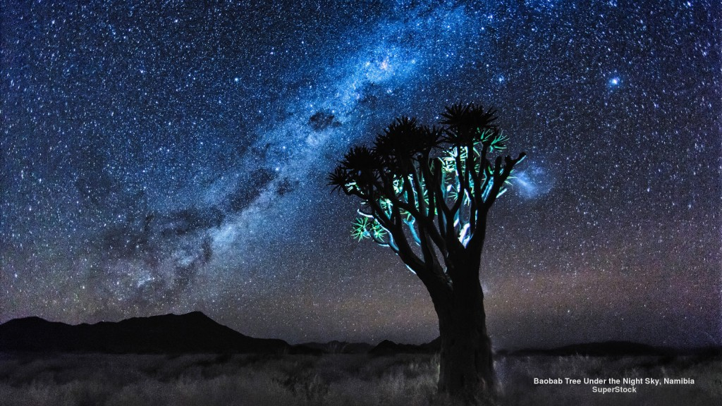 baobab tree under the night sky in Namibia (South Africa)